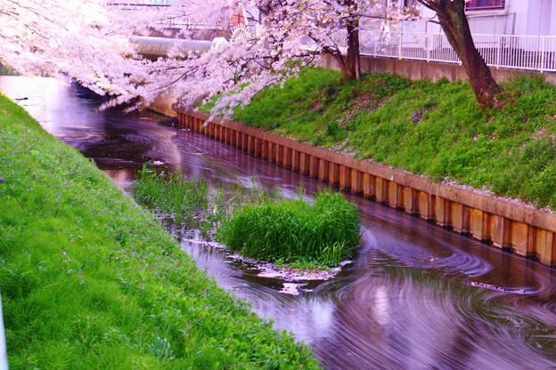 200404_51S_花びらをスローで・S18200(渋川) (155-A1)