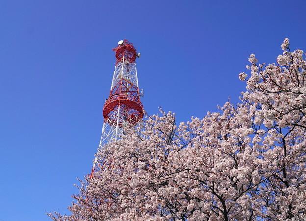 200402_05K_電波塔と桜・S18200(鶴見川) (4)