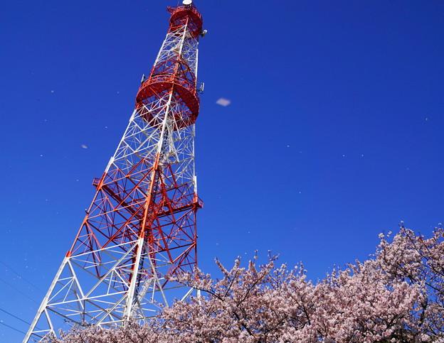 200402_05K_電波塔と桜・S18200(鶴見川) (12)