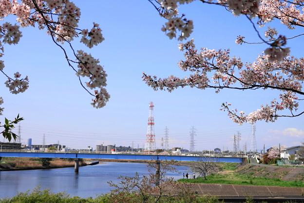 200406_02S_桜と鶴見川・RX10M3(鶴見川) (12)