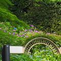 Photos: 200609_11A_紫陽花を愛でる・S18200(多摩川台) (7)