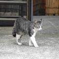 Photos: 200526_02N_若い猫・RX10M3(近隣) (1)