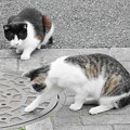 Photos: 200531_01N_猫ちゃん・RX10M3(近隣) (11)