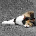 Photos: 200602_51N_猫ちゃん・RX10M3(近隣) (2)