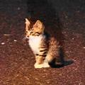 Photos: 200609_81N_闇夜の子猫・RX10M3(近隣) (8)