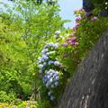 200617_12A_紫陽花・S1655G(多摩川台) (246)