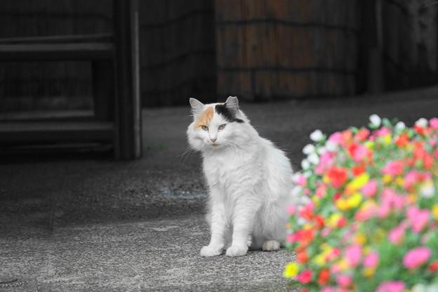200714_05N_近隣の猫・RX10M3(近隣) (5)
