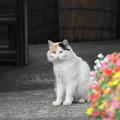 Photos: 200714_05N_近隣の猫・RX10M3(近隣) (5)