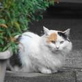 Photos: 200714_10N_猫ちゃん・RX10M3(近隣) (2)