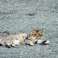Photos: 200729_03N_外猫・RX10M3(近隣) (1)