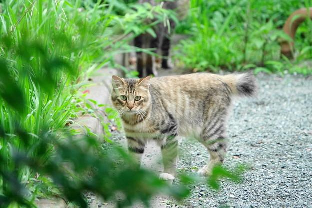 200729_07N_外猫・RX10M3(近隣) (5)