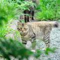 Photos: 200729_07N_外猫・RX10M3(近隣) (5)