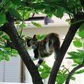 Photos: 200806_31N_猫・RX10M3(近隣) (1)