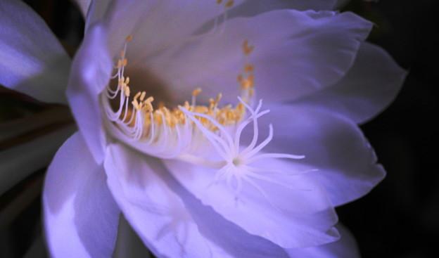 200718_61G_月下美人・Sm(我が家の花壇) (30)