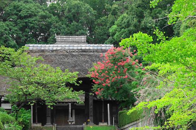 200913_03S_百日紅・RX10M3(西方寺) (3)