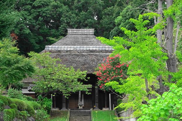 200913_13S_山門と百日紅・RX10M3(西方寺) (2)