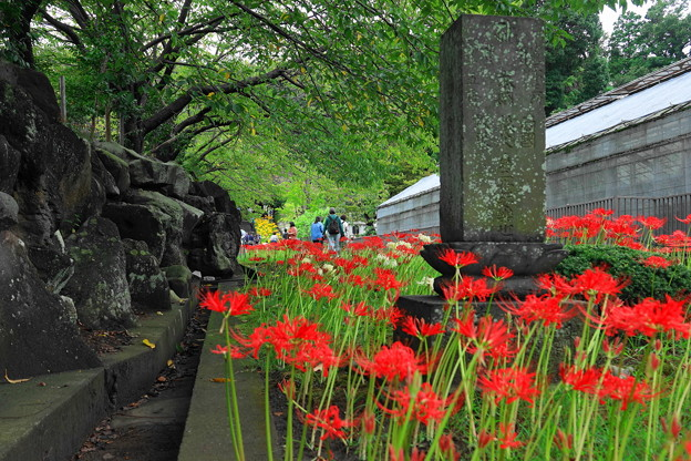 200927_27M_参道の入り口から・RX10M3(西方寺) (18)