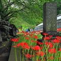 Photos: 200927_27M_参道の入り口から・RX10M3(西方寺) (18)