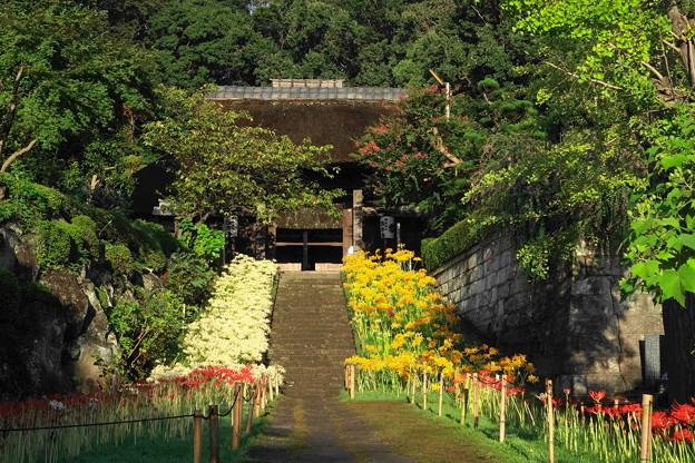 200928_11H_花の寺・秋・RX10M3(西方寺) (48)