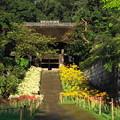 Photos: 200928_11H_花の寺・秋・RX10M3(西方寺) (48)