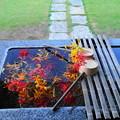 Photos: 200930_14M_彼岸花・水屋・RX10M3(西方寺) (13)