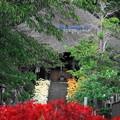 Photos: 200930_12H_彼岸花・参道・RX10M3(西方寺) (6)