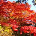 201114_28K_紅葉・RX10M3(和田山紅葉街道) (1)