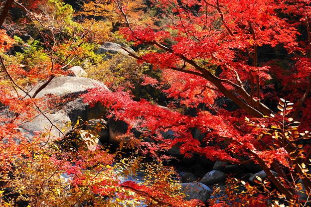 201114_71K_渓谷の紅葉・RX10M3(昇仙峡) (94)