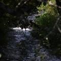 写真: 川