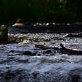 写真: 流れ