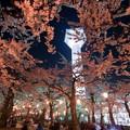 写真: 夜桜とタワー