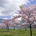 Photos: はこだて未来大学と満開の桜