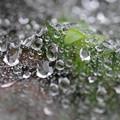 写真: 梅雨時