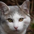 写真: 隣の猫