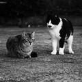 写真: 仲良し猫