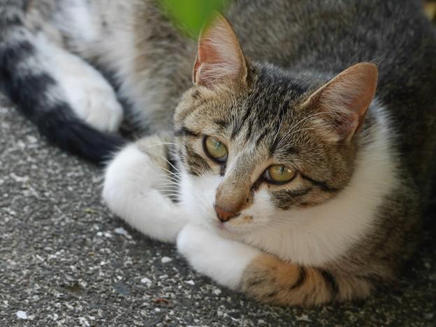 写真: 庭猫