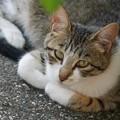 Photos: 庭猫