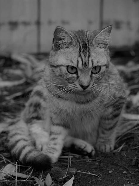 写真: 愛猫