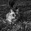 写真: 愛猫2