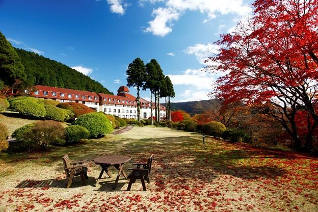 紅葉が美しい山のホテル庭園