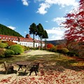 Photos: 紅葉が美しい山のホテル庭園