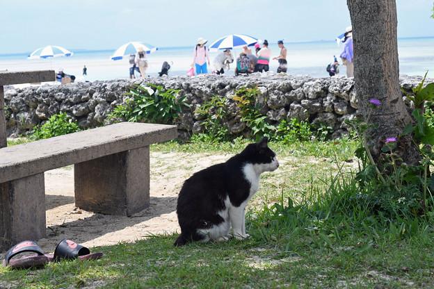 コンドイビーチの猫
