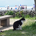 写真: コンドイビーチの猫