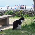 Photos: コンドイビーチの猫