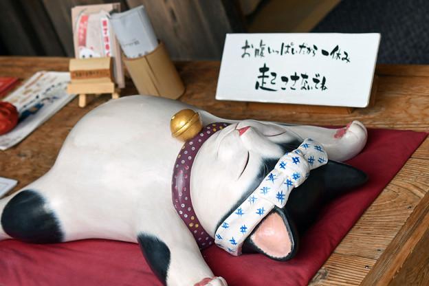 写真: おかげ横丁の猫