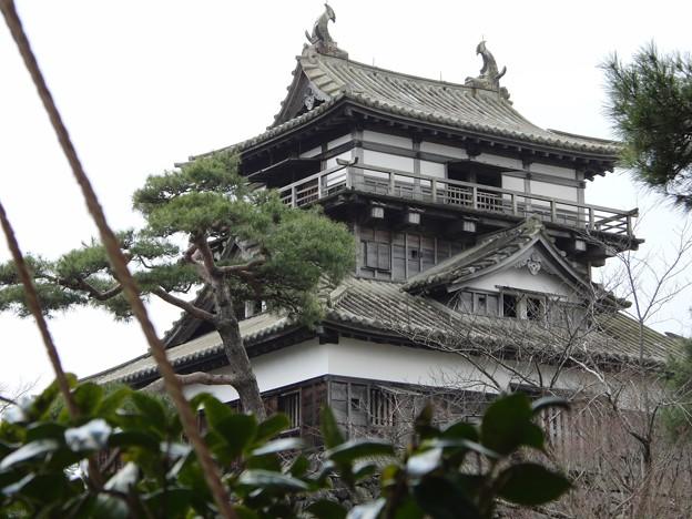 Photos: 丸岡城