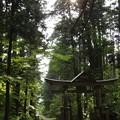 Photos: 平泉寺白山神社の鳥居
