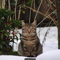 Photos: 南天の横に佇む猫