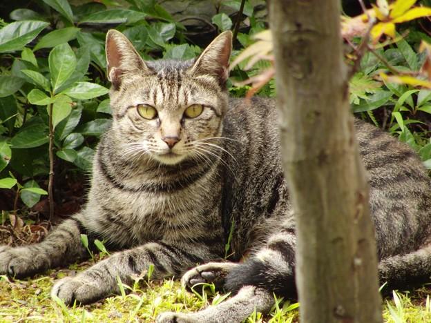 Photos: 日向ぼっこしている猫