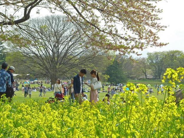 写真: 菜の花とカップル